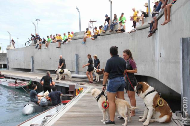 Démonstration des chiens de secours en mer
