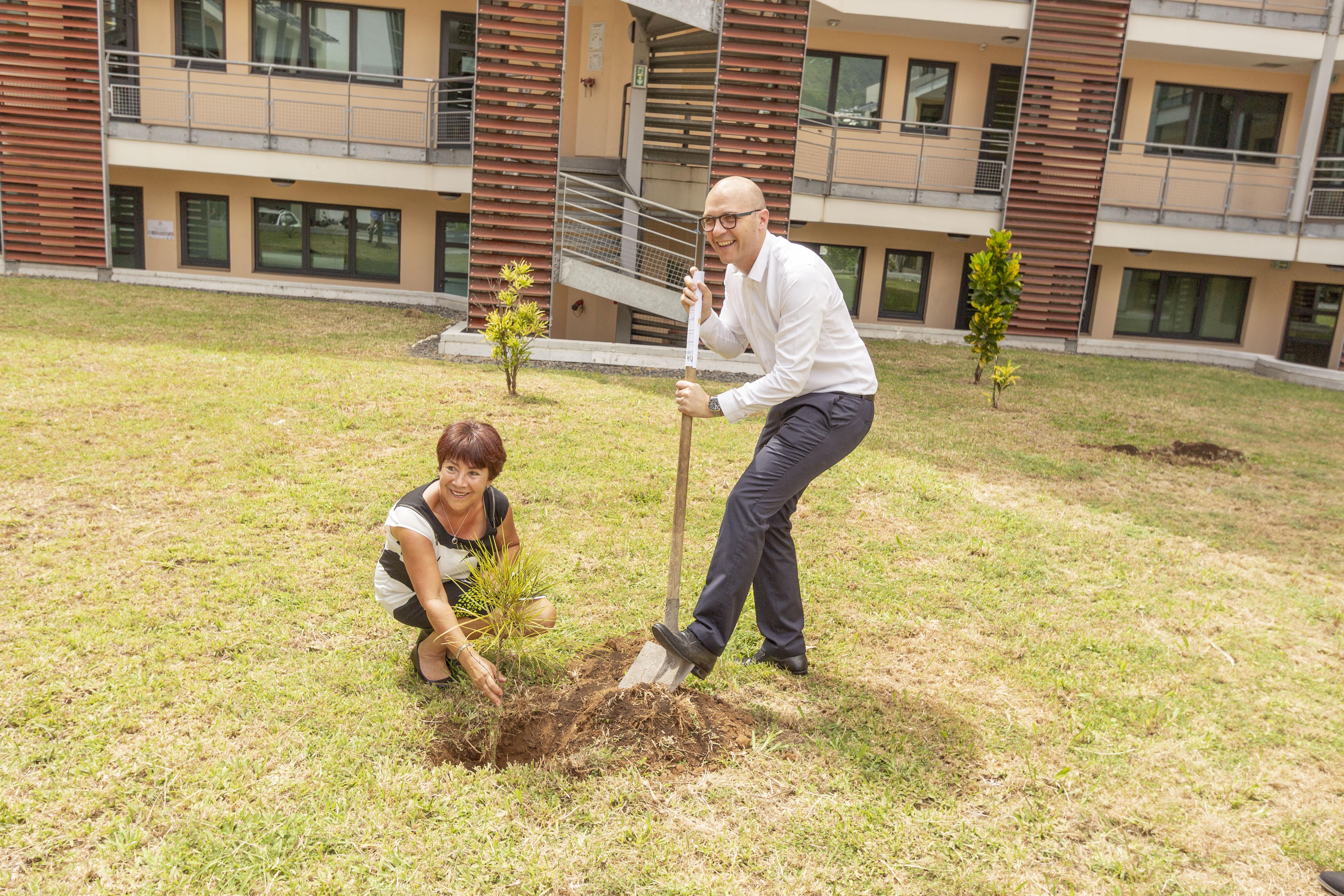 Et ils ont planté un arbre...