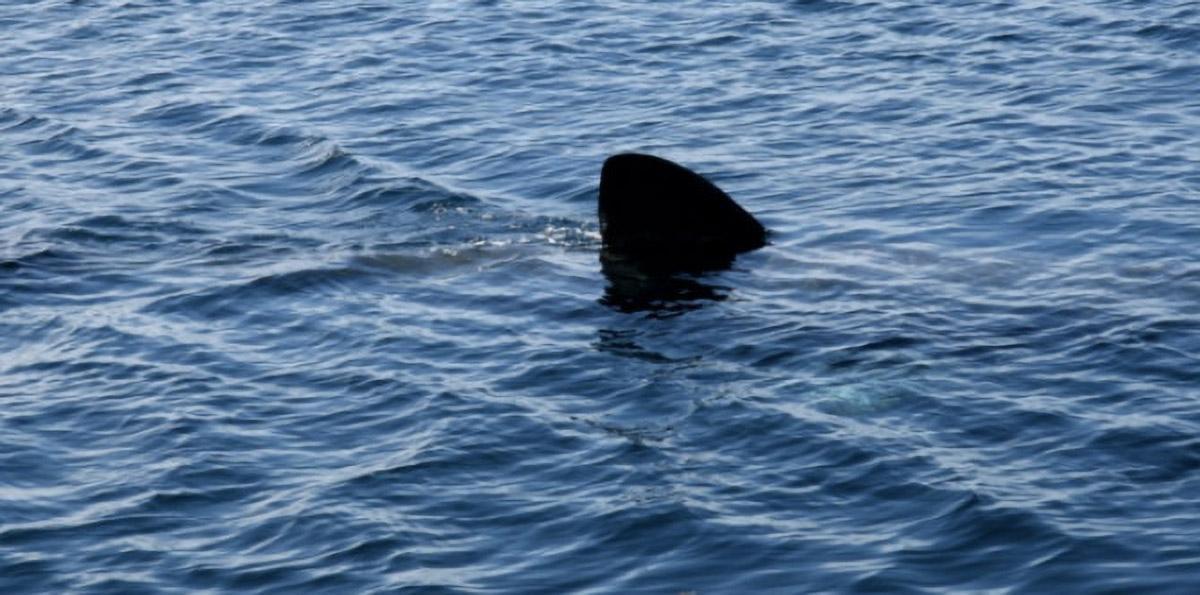 Un nageur tué par un requin en Nouvelle Calédonie